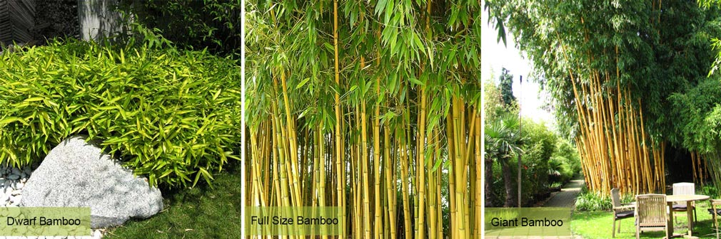 Bamboo Care and Maintenance
