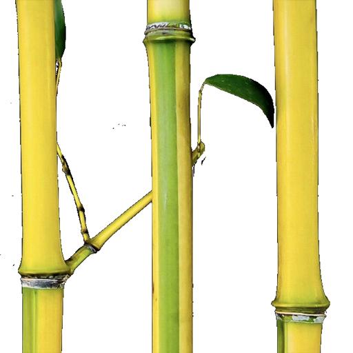 Full Size Bamboo