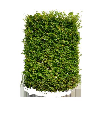 Green Hedging