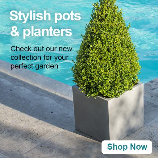 Garden Furniture Garden Plants Online